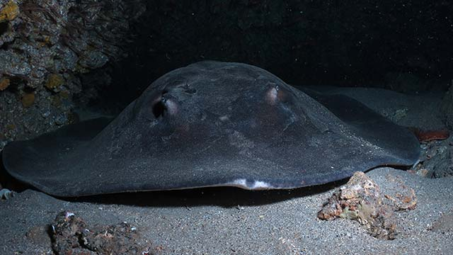 Las mejores inmersiones de Lanzarote - Cueva de las gambas