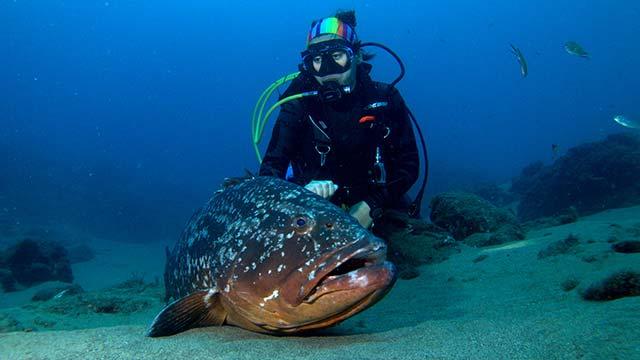 Las mejores inmersiones de Lanzarote 2019 - Las Coloradas