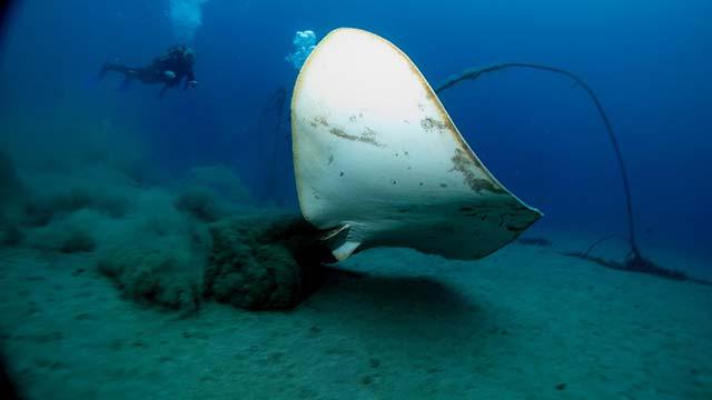 Las mejores inmersiones de Lanzarote 2019 - Veril de Fariones