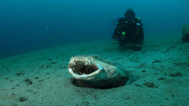 Las mejores inmersiones de Lanzarote - Pecios del Quíquere