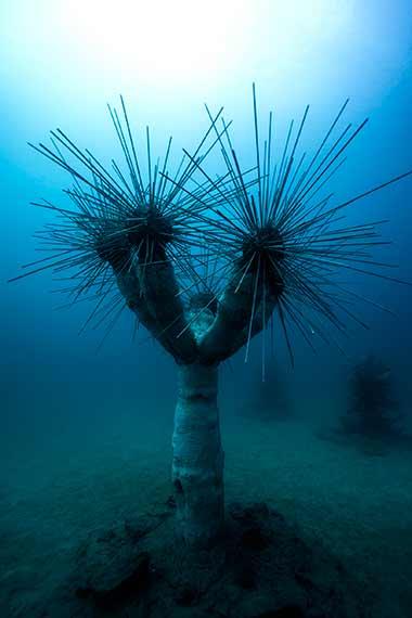 Cactus Museo Atlántico